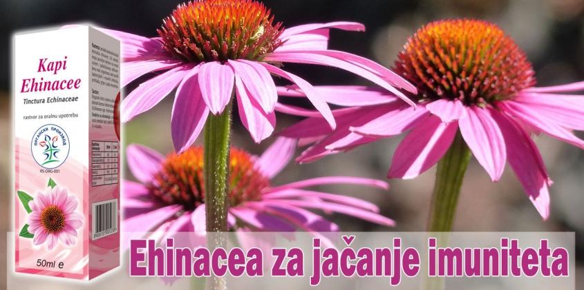 Ehinacea za jačanje imuniteta