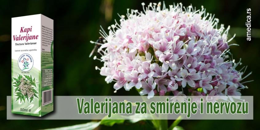 Valerijana za smirenje i nervozu