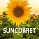 suncokret