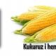 Kukuruz i hemoroidi
